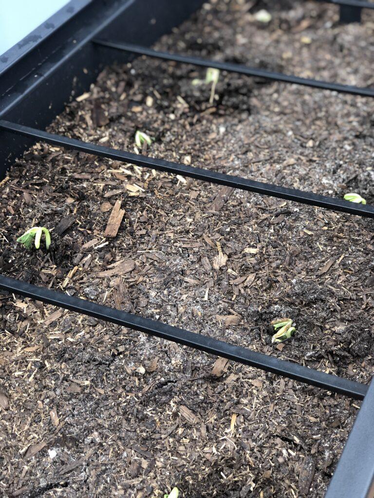 container gardening, vegetable patio gardening